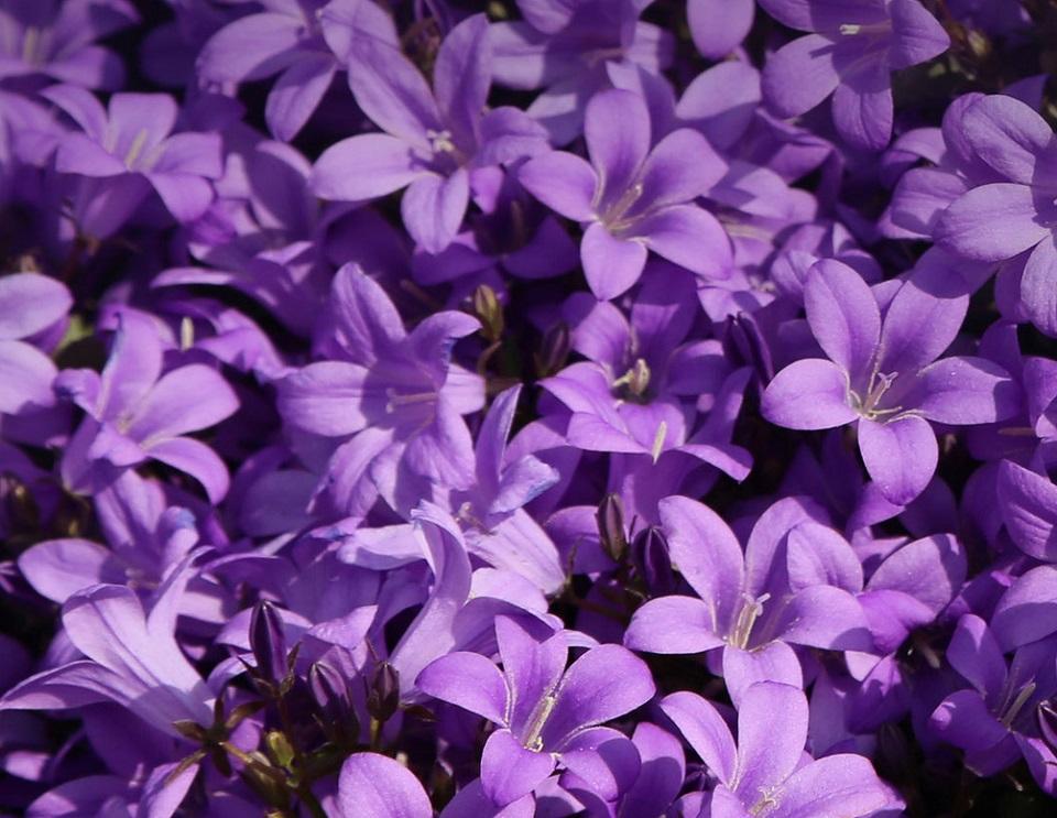 Набор парфюма Vivinevo Prochan Perfume Set 3*15ml цветы колокольчики